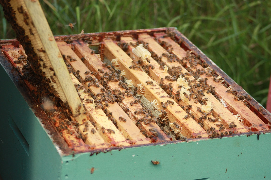Single box of bees, frames, and honey