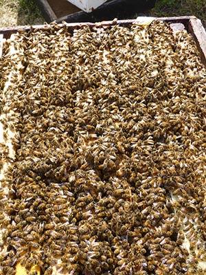 Wholly smokes, look at all those bees