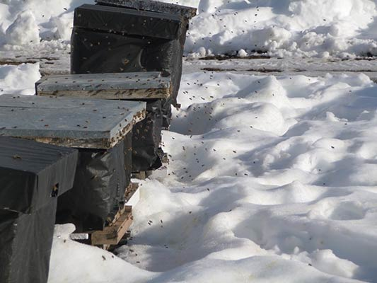 Cant wait to get inside these hives