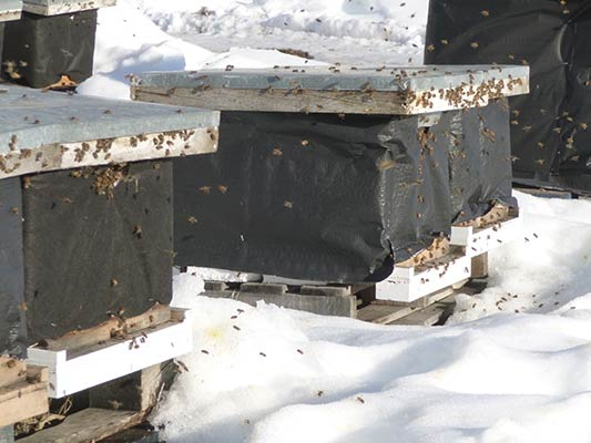 Winterizing single hives
