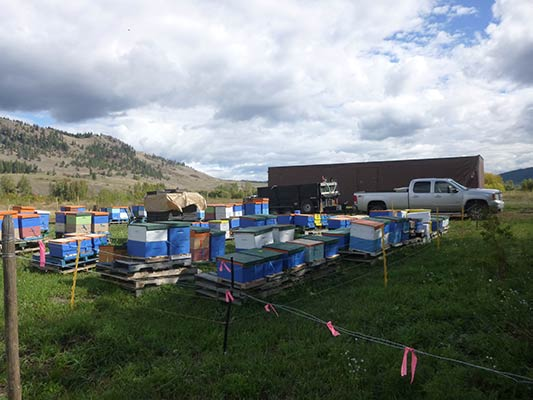 Look at all those hives!