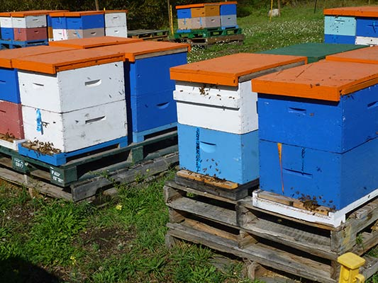 Double Hive