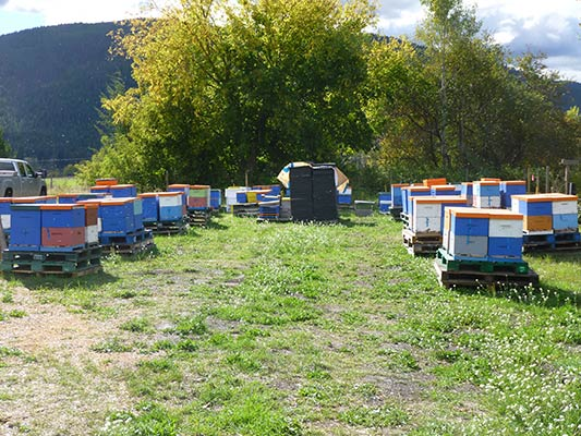 Secondary Bee Yard