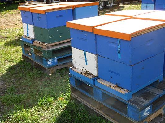 Pollination Units ready to go