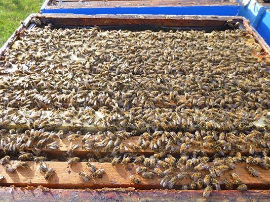 Inside a hive