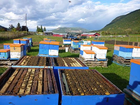 Main Bee Yard