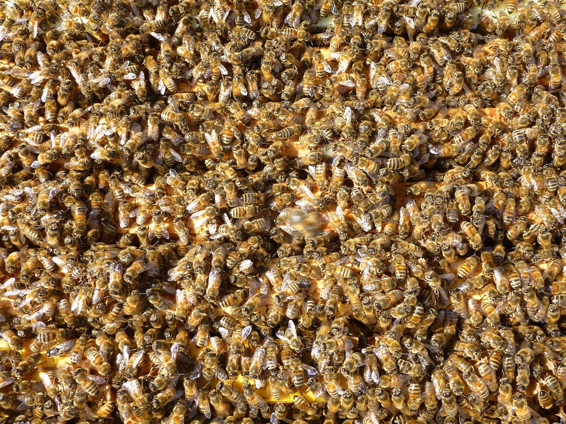 Bees, bees, and more bees