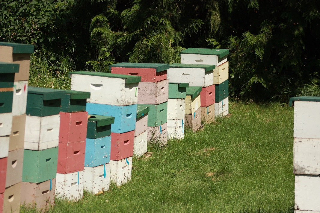 My honey producing colonies